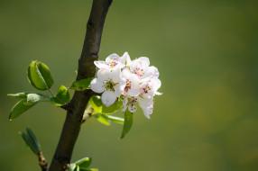 Цветущие деревья кустарники макро