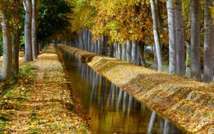 парк, аллея, деревья, канал, осень