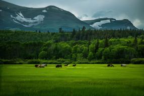 обои для рабочего стола 2048x1365 природа, горы, трава, зелень, поле, кони