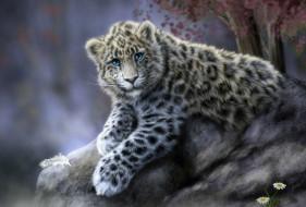 рисованное, животные, ирбис, камень, перышко, ромашки, снежный, барс, кошка, леопард, животное