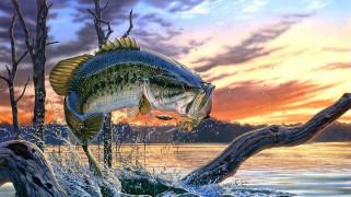 рисованное, животные, ротан, блесна, рыба, рыбная, ловля