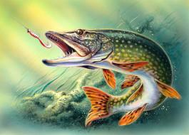 рисованное, животные, щука, блесна, рыба, рыбная, ловля