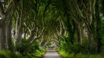 dark hedges,  northern ireland, �������, ������, �������, �������, �����