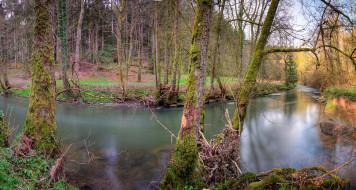 лес, река, излучина