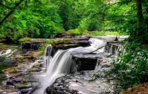 лес, деревья, река, пороги, поток, камни, скалы