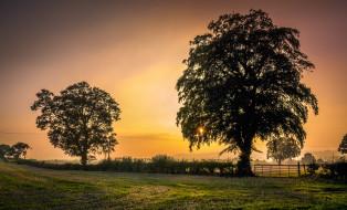 природа, деревья, изгородь, поле