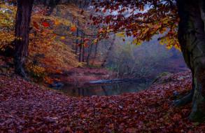 природа, реки, озера, ручей, лес, осень
