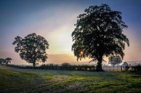 природа, деревья, поле, изгородь