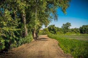 природа, дороги, поле, тракт, лес