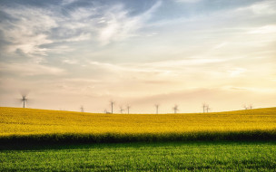 природа, поля, ветряки, рапс, лето