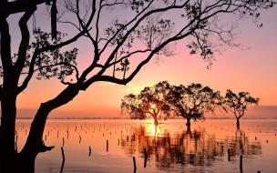 природа, восходы, закаты, мангры, закат, залив, mindanao, philippines, минданао, филиппины, деревья