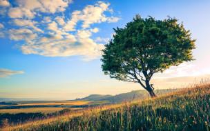 природа, деревья, облака, трава, небо, дерево, поле