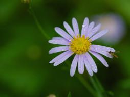 капли, насекомое, роса, лепестки, цветок, фон, макро