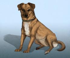 рисованное, животные,  собаки, взгляд, собака