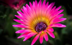 цветок, лепестки, природа, краски