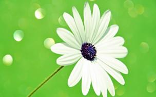 цветок, лепестки, стебель, свет, блик