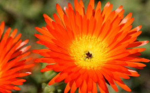 сад, лепестки, поле, луг, цветок