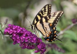 обои для рабочего стола 2048x1446 животные, бабочки,  мотыльки,  моли, бабочка