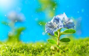цветы, искры, трава, петунья, цветок