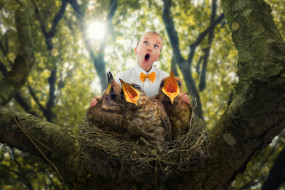 юмор и приколы, the, bird, choir, ребёнок, птенцы, гнездо