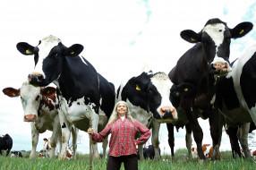 коровы, женщина, постух