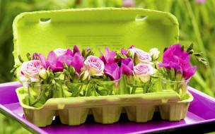 �����, ������,  ����������, ������, roses, ����