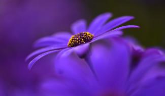 размытость, цветы