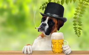 Боксер, шляпа, сигарета, пиво, кружка, лапы, джентельмен, ветки, листья, юмор