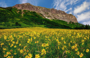 обои для рабочего стола 2048x1335 природа, луга, трава, цветы
