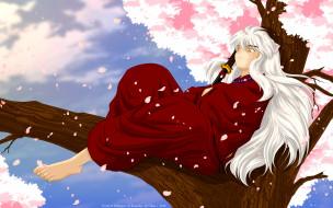 аниме, inuyasha, сакура, пёс, полудемон, парень, дерево, меч, весна, тессайга