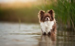 животные, собаки, озеро, друг, взгляд, собака