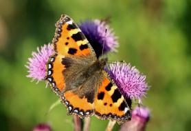 животные, бабочки,  мотыльки,  моли, крылья, бабочка, макро, усики, фон