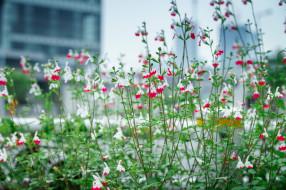 обои для рабочего стола 2048x1365 цветы, клумба, растения