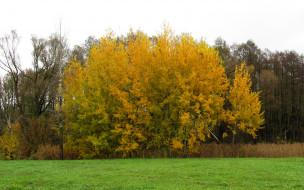 обои для рабочего стола 2560x1600 природа, деревья, листья, дерево, осень, желтые