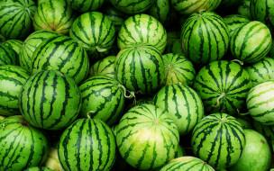 еда, арбуз, арбузы, green, fruit, watermelon
