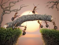 обои для рабочего стола 3000x2293 животные, насекомые, муравьи, мох, макро, солнце, закат, берега, мостик, работа, ситуация