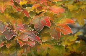 обои для рабочего стола 3200x2096 рисованное, природа, клен, осень, листья