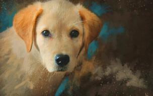 рисованное, животные,  собаки, собака, щенок, морда, портрет, рыжий, живопись, картина, рисунок, мазки