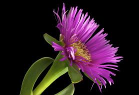 фон, макро, цветок