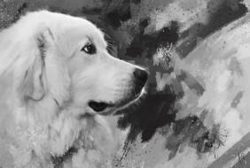 рисованное, животные,  собаки, белая, собака, рисунок, мазки, черно-белое, морда, нарисованная, графика, картина, живопись