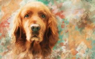 рисованное, животные,  собаки, мазки, рисунок, портрет, морда, рыжая, собака, картина, живопись