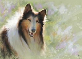 рисованное, животные,  собаки, солнечно, портрет, морда, колли, мазки, картина, живопись, рисунок, собака