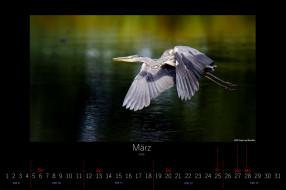 календари, животные, птица, март, 2016, летит, цапля