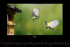 календари, животные, пара, синицы, май, птицы, 2016