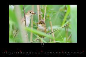 календари, животные, птицы, июль, 2016
