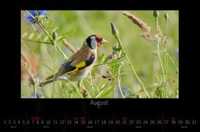 календари, животные, цветы, луг, птица, август, 2016