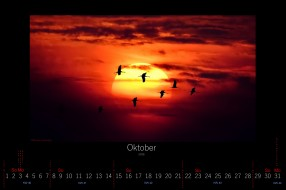 календари, животные, 2016, птицы, закат, октябрь