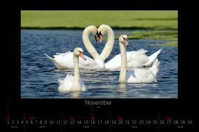 календари, животные, лебеди, ноябрь, 2016