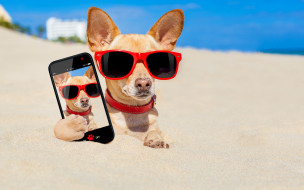 смартфон, песок, пляж, очки, юмор, фото, снимок, Чихуахуа
