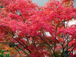 обои для рабочего стола 1920x1440 природа, деревья, осень